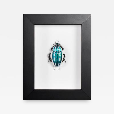 Emanuel Toffolo Murano Glass Mecynorrhina Torquata Beetle