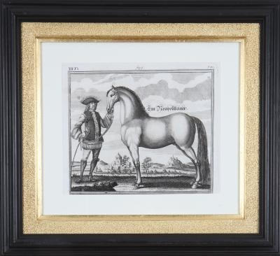 Engelhardt Nunzer Georg Engelhard von L hneisen 18th Century Engravings of Horses