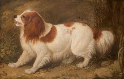 English 19th century Folk art Spaniel portrait