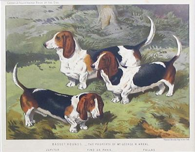 English Chromolithograph of Basset Hounds circa 1881