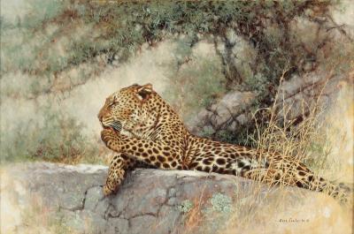 Eric Forlee Cheetah