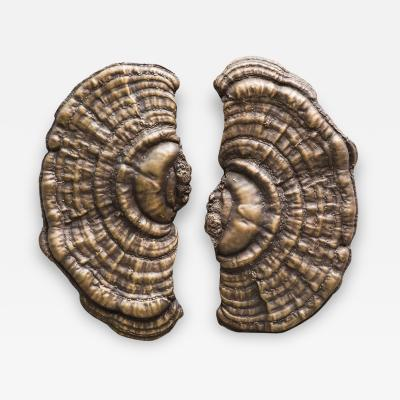 Erin Sullivan Flora Series Bronze Mushroom Door Pulls USA
