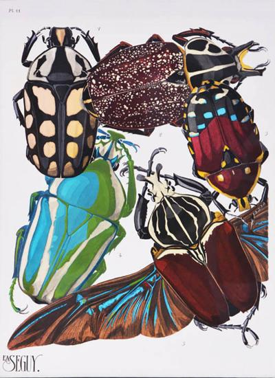 Eugene Alain Seguy Seguy A set of Eight Insects