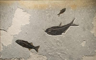 Fossil Mural from the Eocene