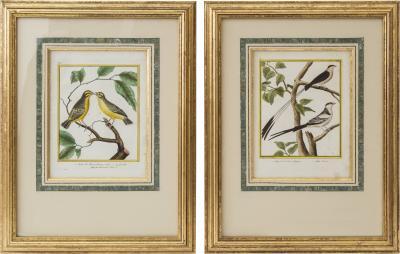 Fran ois Nicolas Martinet Pair of Engravings of Birds by Fran ois Nicolas Martinet