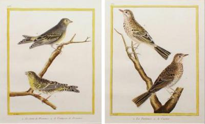 Fran ois Nicolas Martinet Pair of Martinet Bird Prints