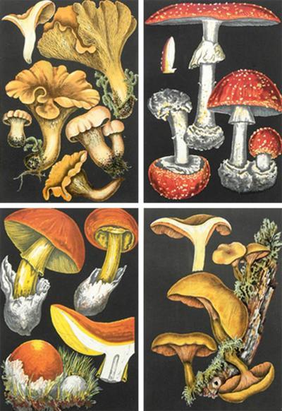 Fritz Leuba Set Four Framed Mushroom Chromolithographs Circa 1890