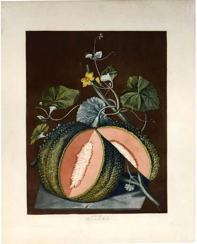 George Brookshaw A Pair of Melons