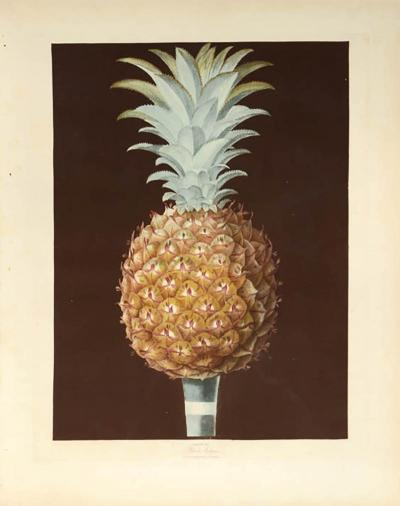 George Brookshaw A Pair of Pineapples