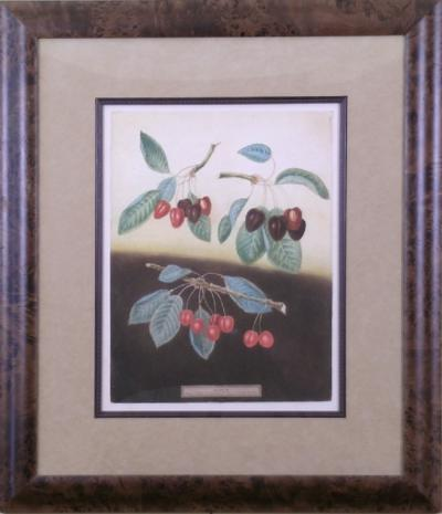 George Brookshaw George Brookshaw Cherries Plate IX 1812