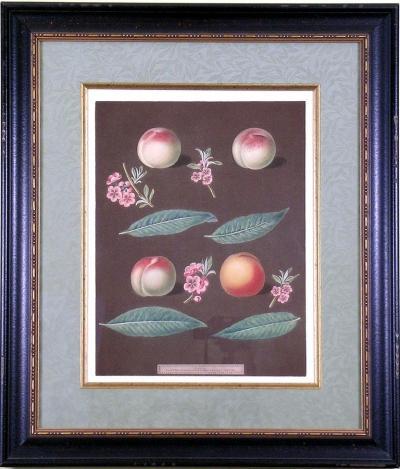 George Brookshaw George Brookshaw Peaches XXVI 1812