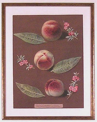 George Brookshaw George Brookshaw Peaches XXXIV 1812