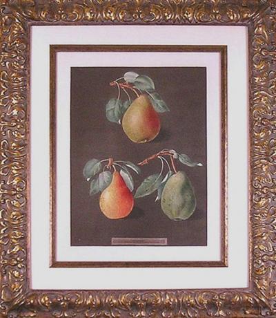 George Brookshaw George Brookshaw Pears LXXXII 1812
