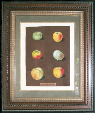 George Brookshaw George Brookshaw Plate 88 Apples 1812