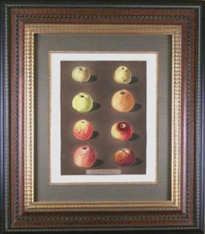 George Brookshaw George Brookshaw Plate 91 Apples 1812
