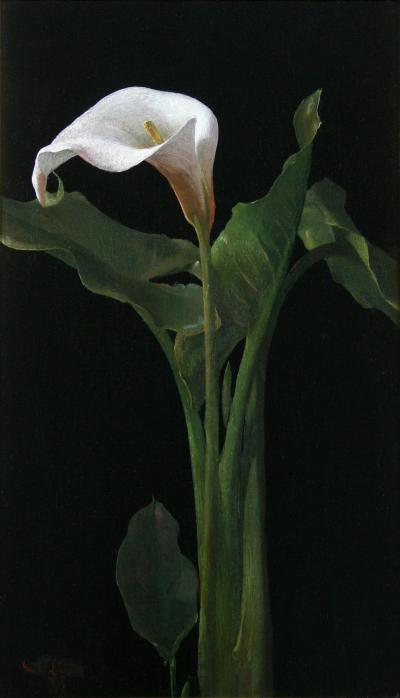 George Cochran Lambdin Calla Lily