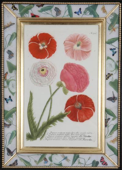 George Dionysius Ehret Johannes Weinmann Set of twelve 18th century botanical engravings