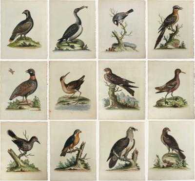 George Edwards 18th Century Set of 12 Bird Prints by George Edwards