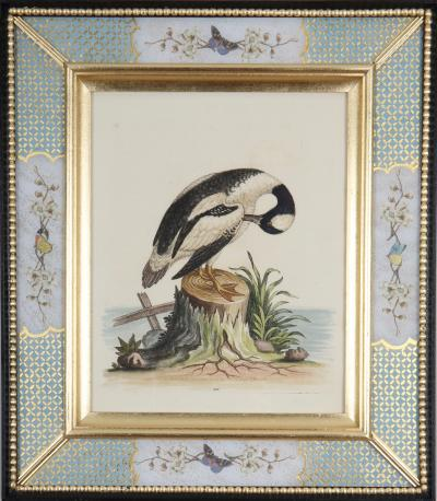 George Edwards George Edwards 18th century engravings of ducks and wading birds