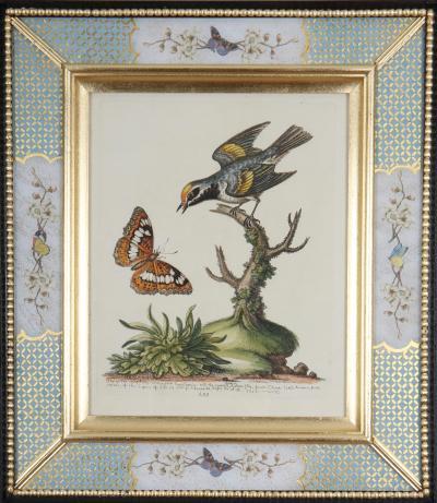 George Edwards George Edwards Bird Engravings c1750 Decalcomania frames