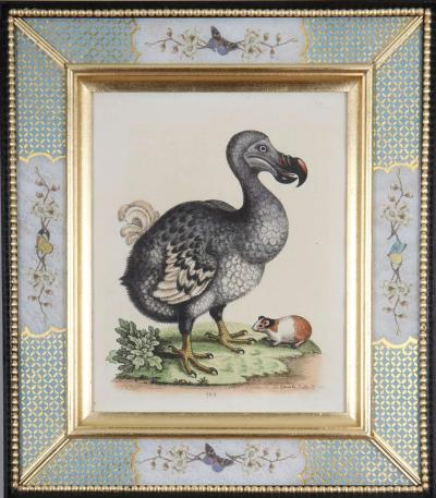 George Edwards George Edwards c18th engraving of a dodo in a decalcomania frame