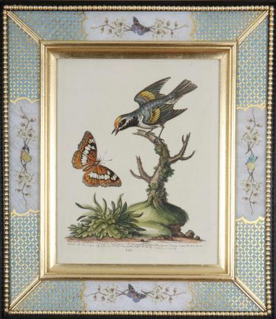 George Edwards George Edwards c18th engravings of birds in decalcomania frames