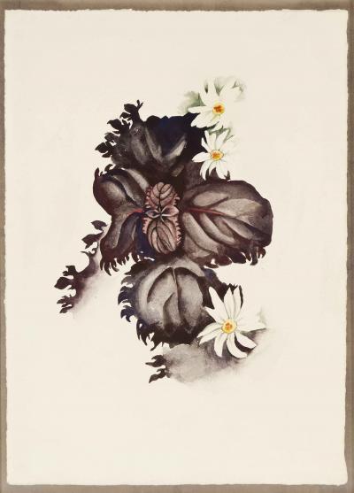 Georgia OKeeffe No 36 Special Nicotine Flower 1920