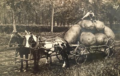 Giant Potatoes Kansas 1908
