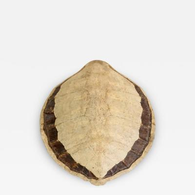 Giant Sea Turtle Carapace or Shell 19th Century