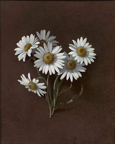 Gordon or Gurdon Trumbull Still Life of Daisies