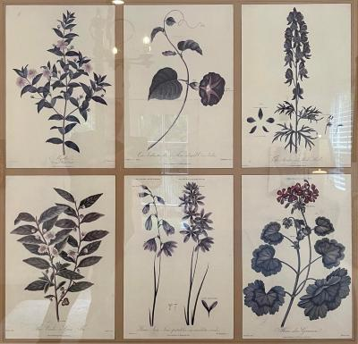 Guy Chaddock Home Set of 6Botanical Prints in Black Gold Chonoiserie Frame