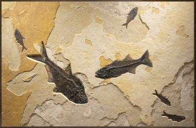 Horizontal Fossil Mural with Bold Color