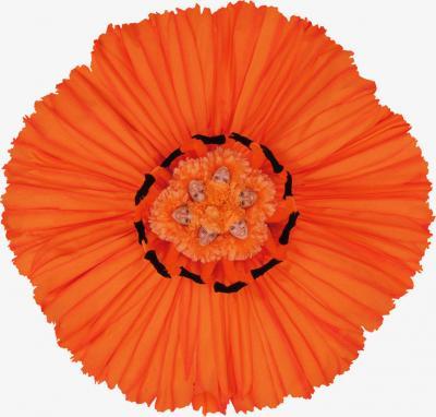 Howard Schatz Fashion Flowers Orange Gardenia