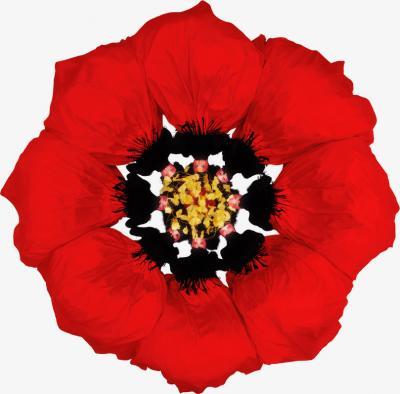 Howard Schatz Fashion Flowers Poppy
