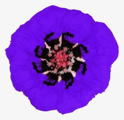 Howard Schatz Fashion Flowers Purple Petunia