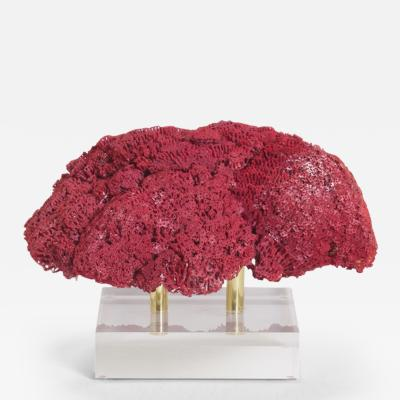 Inspiring Large Red Pipe Organ Coral Specimen