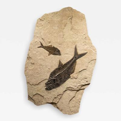 Irregular Shaped Fossil Mural