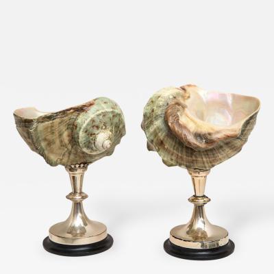 J Antony Redmile Pair of Nautilus Objects by J Antony Redmile