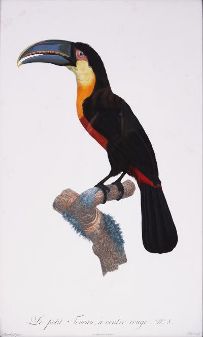Jacques Barraband Barraband Set of Four Toucans engravings finished by hand