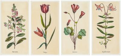 Jacques de Seve Four Antique Botanical Engravings or Prints