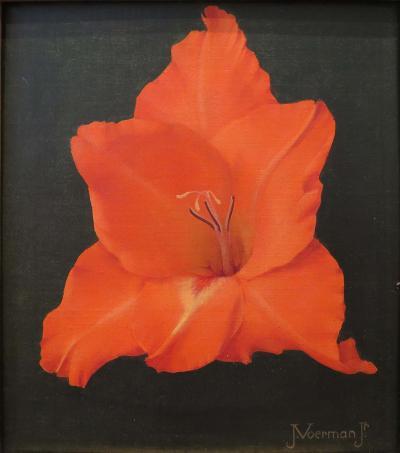 Jan Voerman Gladiola Orange