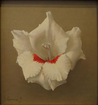 Jan Voerman Gladiola White and Red