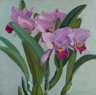 Jane Peterson Cattleya Orchids