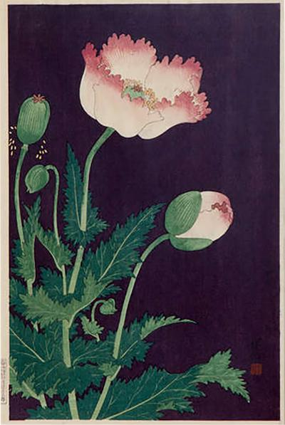Japanese Showa Botanical Print of Poppies