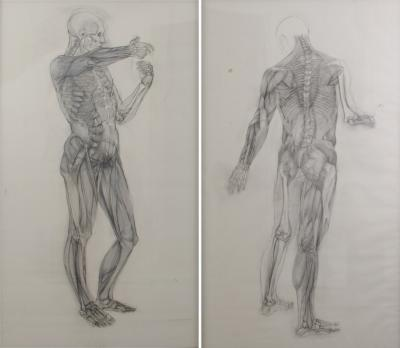 Jaye Gergory Pair of Life Sized Anatomical Studies 83 x 49