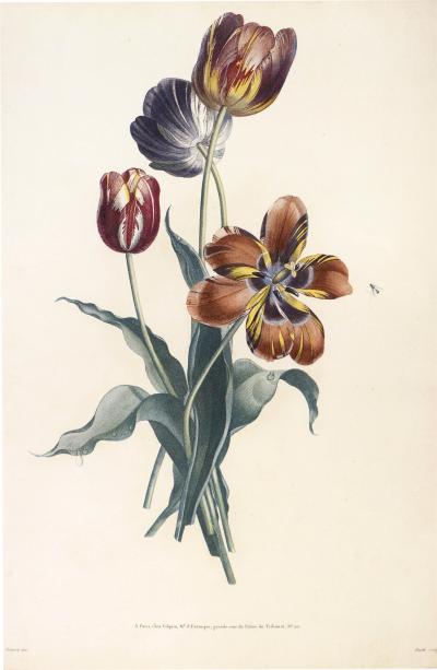 Jean Louis Prevost Collection des Fleurs et des Fruits a Set of Five Floral Designs