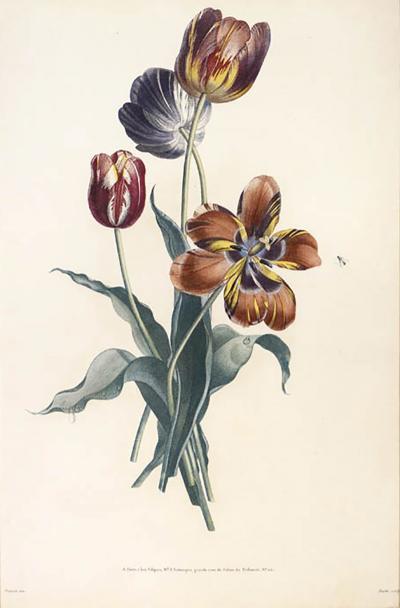Jean Louis Prevost Collection des Fleurs et des Fruits a Set of Floral Designs