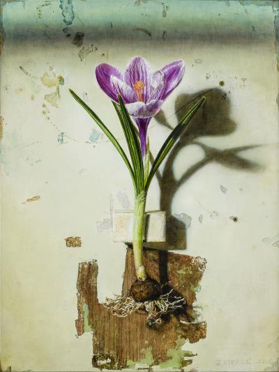 Jeffrey Ripple Crocus