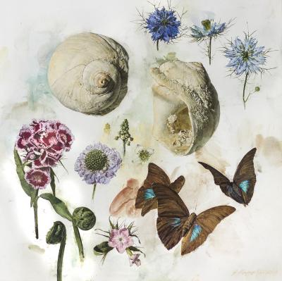 Jeffrey Ripple Shells Butterflies and Flowers