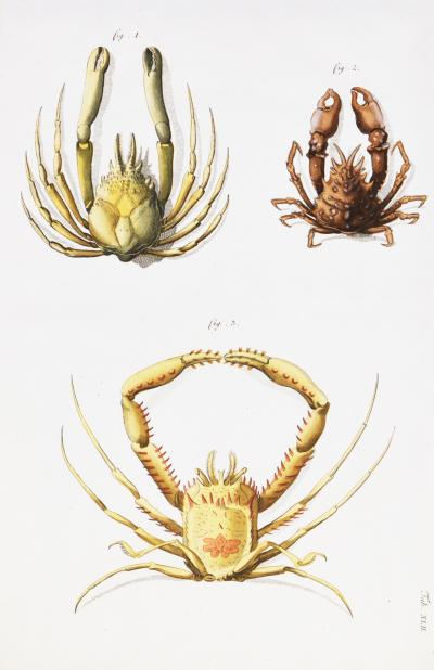 Johann Friederich Wilhelm Herbst A Group of Six Crustaceans Crabs